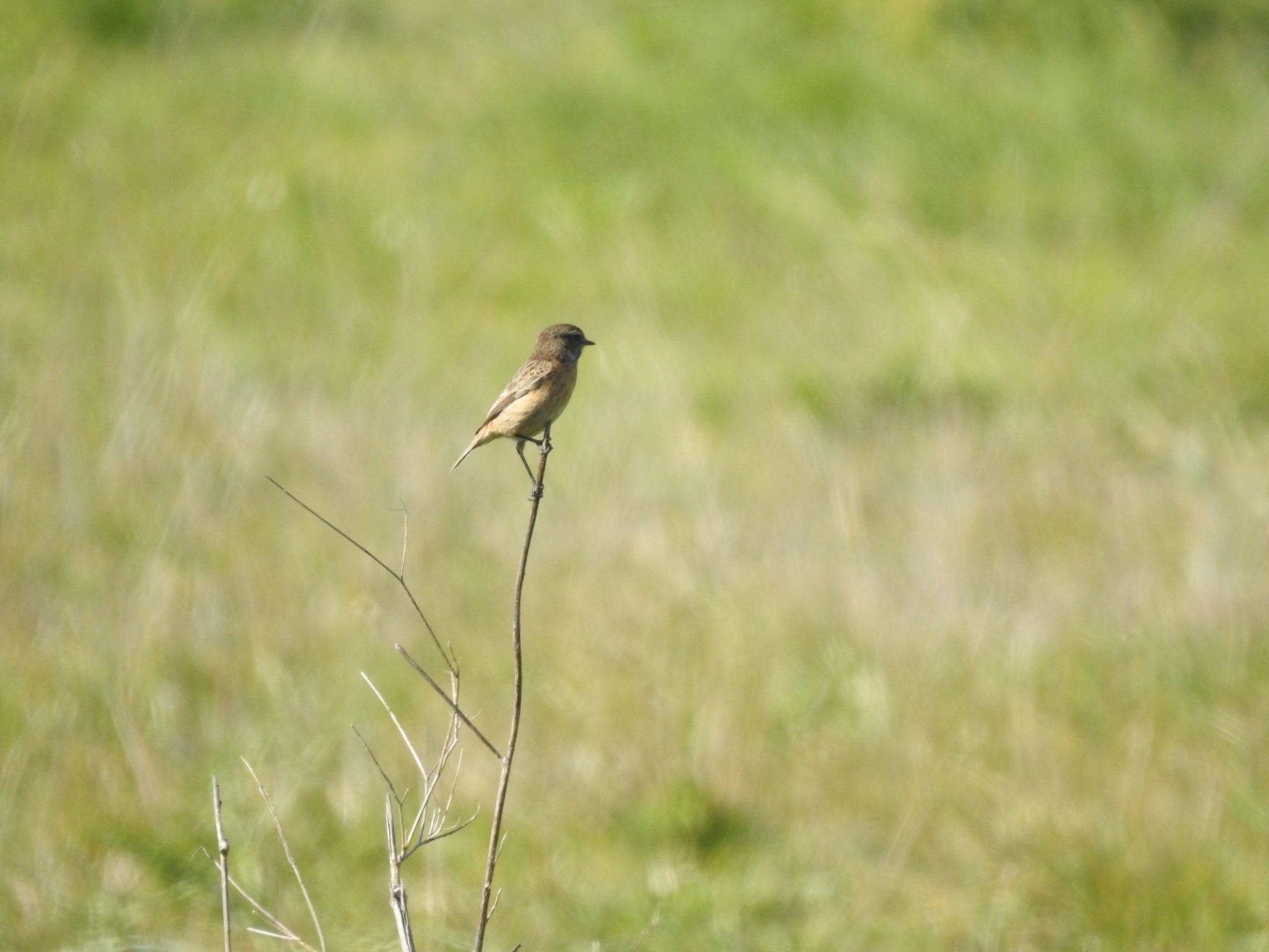 evoluir oeiras - passarinho em prado
